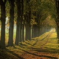 Weg in den Herbst - way to Autumn